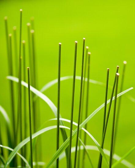 Symmetry in the Grass by Marilyn Cornwell