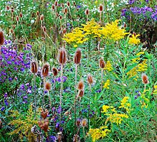 Wild Abundance by Nancy Barrett