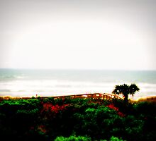 Florida, I took this a long time ago!(: by xXMyLifeXx