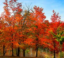 """"""" Blaze Red for Fall"""" #5 by canonman99"""