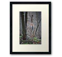 Deer Looks in Ravine Framed Print