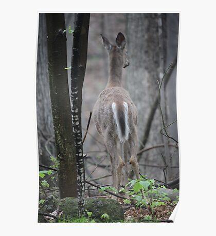 Deer Looks in Ravine Poster