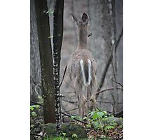 Deer Looks in Ravine Photographic Print