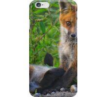 Red Fox Kits! iPhone Case/Skin