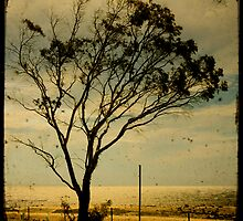 lonely tree three by Sonia de Macedo-Stewart