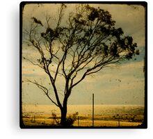 lonely tree three Canvas Print