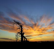 Lone Pine by bushdrover