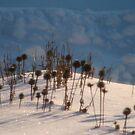 My Snow Garden by kkphoto1