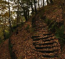 Split Path by Andrew Cryer