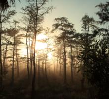 foggy swamp Sticker