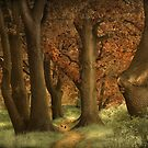 The Wonder Woods by LarsvandeGoor