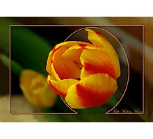 Tulip Mickey Mouse Photographic Print