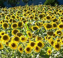 Sunny Days by Michele Markley