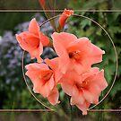 Gladiolus by MarianaEwa