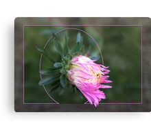 Aster Giants of California Canvas Print