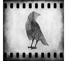 The Soul Of Crow Photographic Print