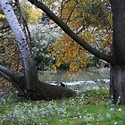 October on muddy river by tanmari