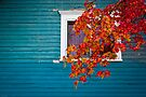 Cottage Colors by Charles Plant