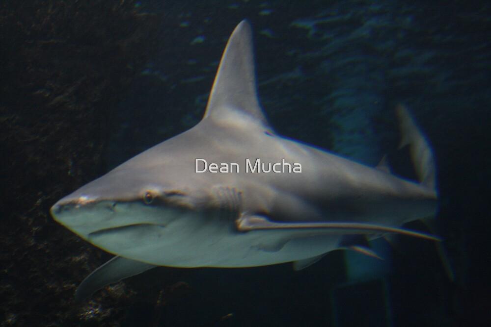 The Swim by Dean Mucha
