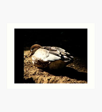 Sleeping Duck Art Print