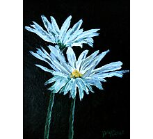 oil painting of daisy flowers Photographic Print