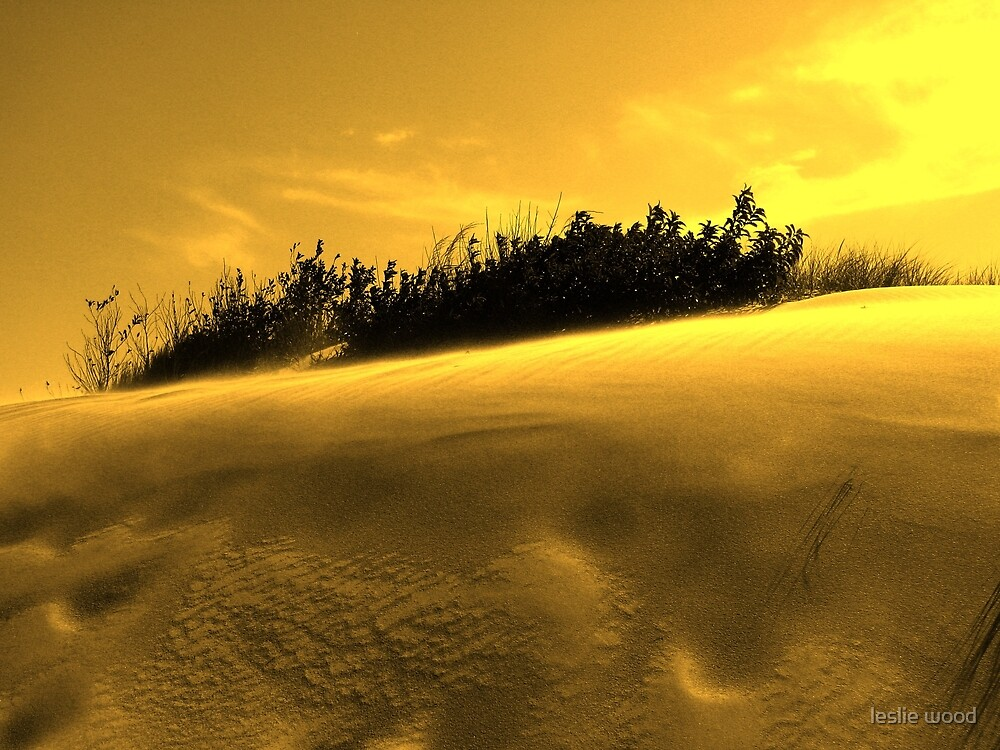 Jockey's Ridge Golden Dunes by leslie wood