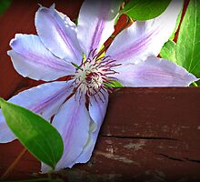 Sunny Clematis by Monnie Ryan