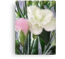 Pink and White Carnations 2 Canvas Print