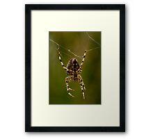 Web Repair Framed Print