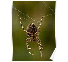 Web Repair Poster