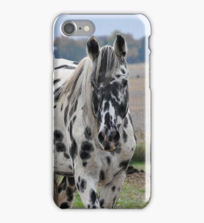 Appaloosa Stallion iPhone Case/Skin