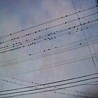 Birds on Wires by Tama Blough
