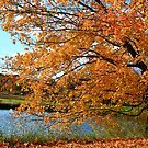 Rural Autumn Beauty by Deborah  Benoit