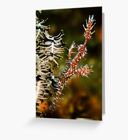 Ornate Ghost Pipe Greeting Card