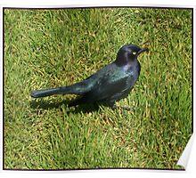 Lovely bird Poster