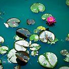 Peaceful Pond by mekea