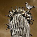 Desert Dove by Sue  Cullumber