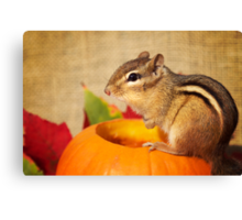 Harvest Chipmunk Canvas Print