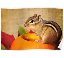 Harvest Chipmunk Poster