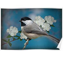 Chickadee and Bridal Wreathe Poster