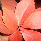 Red leaves by Ana Belaj