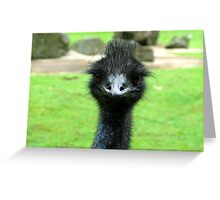 EMU BIRD ANIMAL  Greeting Card
