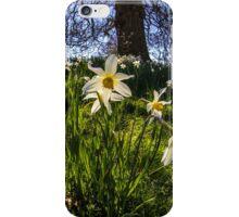 Fisheye Daffodil Landscape iPhone Case/Skin