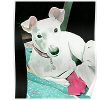Sully the Jack Russell Terrier Poster
