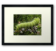 huge green caterpillar Framed Print