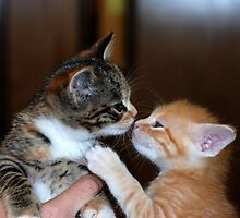 Kissing Kittens 2 by amyboddie