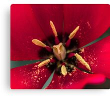 Macro Red Tulip Flower Canvas Print