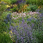 Northern Perennial  Garden by awgilmore