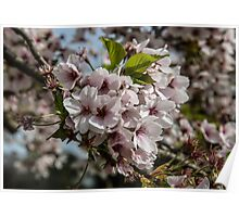 Pink Blossom Flowers Poster
