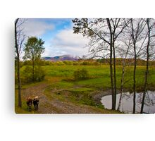 Two Cows in Fall Canvas Print